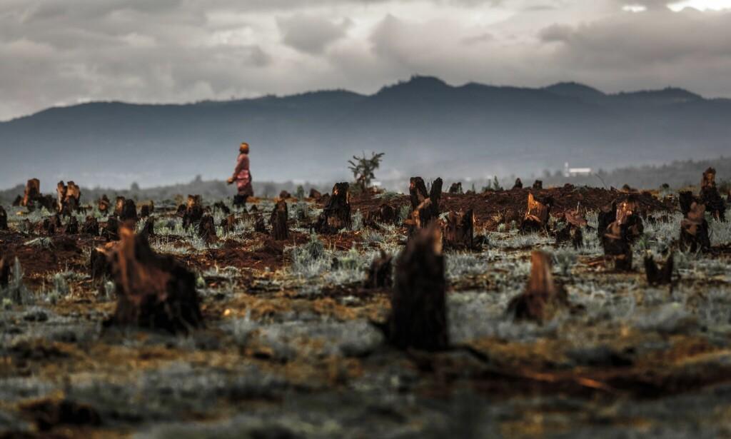 BRENT JORD: Avskoging og overdrevet landbruk tar livet av arter som er viktig for økosystemet. Foto: Dudarev Mikhail/Shutterstock.com