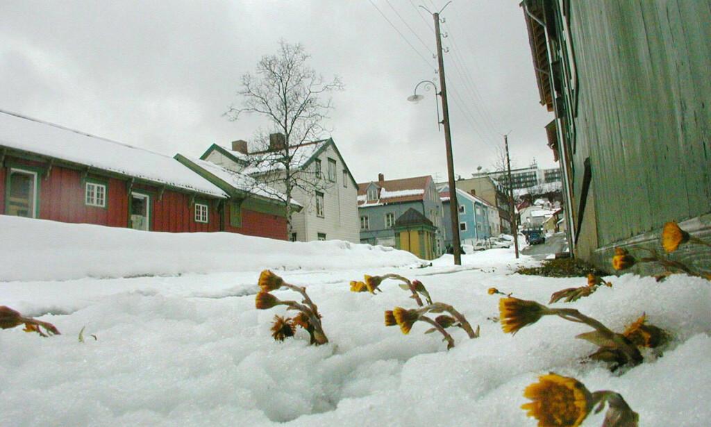 MER SNØ: Den første uka i apri ser ut til å bli preget av nedbør i form av snø de aller fleste steder i landet. Foto: Jan-Morten Bjørnbakk / Scanpix