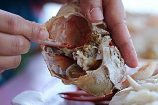 GIFTFUNN: Forskerne i Bergen fant overraskende store mengder kadmium i fylte krabbeskjell og -postei. Foto: Shutterstock