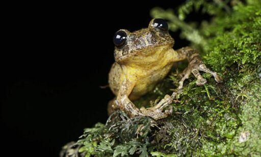 image: Denne frosken hadde ingen sett på 150 år