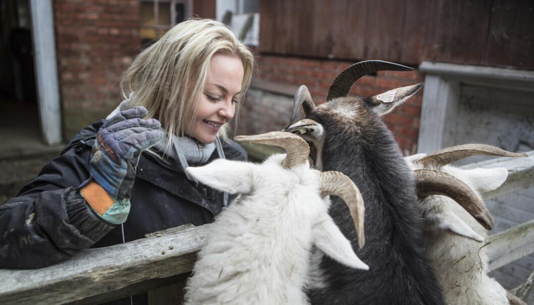 Alle dyrene på gården til Anette og kjæresten Andreas har navn. Molly, Dolly og Ferdinand er blant de firbeinte vennene du kan hilse på om du besøker Dale Store gård. FOTO: Alf Berg