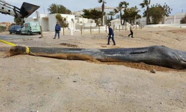 image: Den døde hvalen hadde 29 kilo plast og bensinkanne i magen