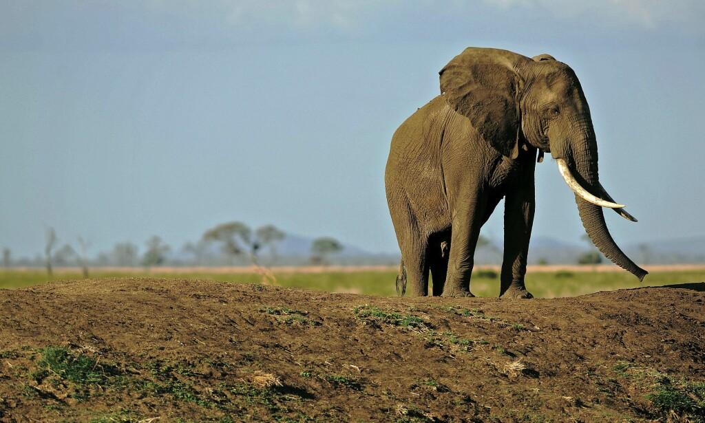 I FARE: Reservatet Selous Game Reserve finner sted i sentrale deler av Tanzania, og har siden 2014 stått på listen over verdensarv i fare. Foto: NTB Scanpix