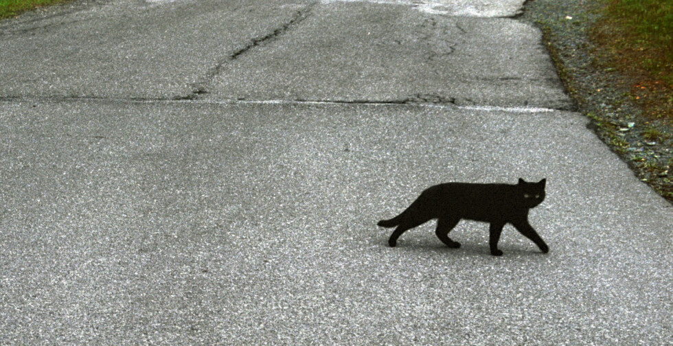 OVERTRO: Noen mener det bringer ulykke om en svart katt passerer foran deg på veien. Andre mener fredag den 13. er en ulykkesdag. Statistikk fra forsikringsbyrået Tryg viser imidlertid det motsatte - at dagen i dag er blant årets tryggeste. Foto: Roland Schgaguler / NTB Scanpix