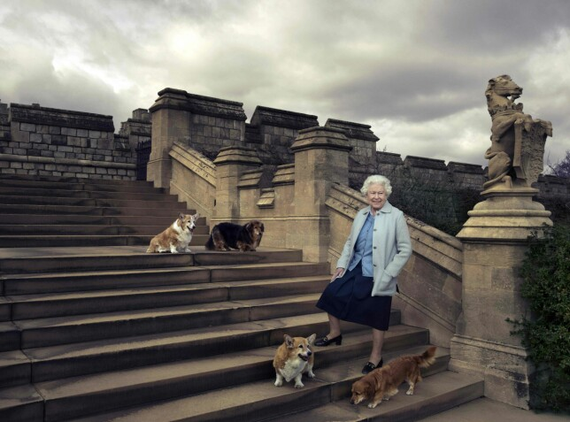 HUNDEELSKER: Dronning Elizabeth på tur med hundene Willow, Vulcan, Candy og Holly rundt Windsor Castle i april i fjor. Foto: Annie Leibovitz/ AFP/ NTB Scanpix