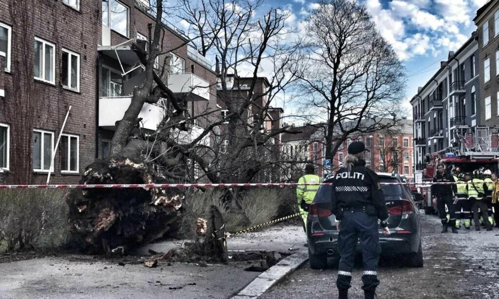 RAST: Et tre har rast mot en bygård i Oslo torsdag kveld. Dette har ført til store materielle skader på bygget. Foto: Tom Stalsberg / Dagbladet