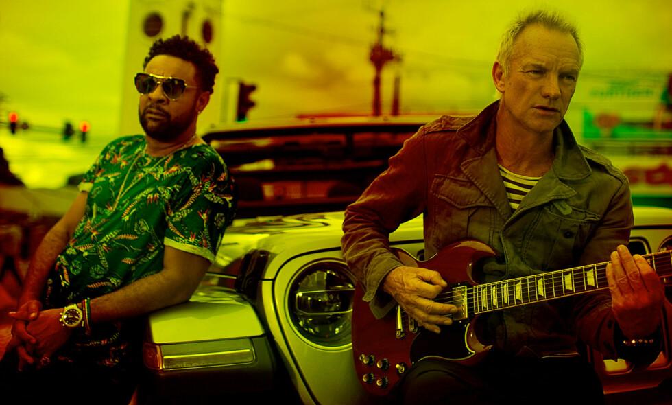 UFORUTSETT DUO: På «44/876» gjør Sting gjør Shaggy, sin jamaicanske vert, dårligere enn han egentlig er, skriver vår anmelder. Foto: A&M Records
