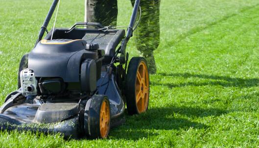 Noen av de røde dagene i mai kan du faktisk bråke med hagearbeidet ...