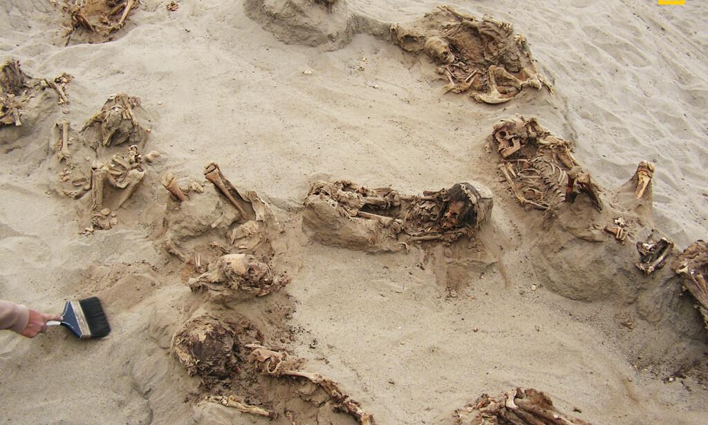SKJELLETTER: Skjelettene ble funnet på landets nordkyst, i byen Trujillo. Foto: Gabriel Prieto / National Geographic / NTB Scanpix