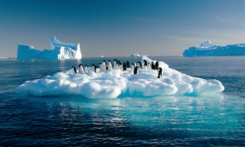Adelie penguins drift on ice floe in the Southern Ocean off the Australian Antarctic Territory, 04 March 2007. The new glacial ice Wilkins Runway situated 65kms from the Australian research station of Casey will allow Australian scientists to greatly expand their studies on the effects climate change is having on Antarctica's fragile environment by providing 20-30 flights from Hobart each summer.  AFP PHOTO/AUSTRALIAN ANTARCTIC DIVISION/Frederique OLIVIER