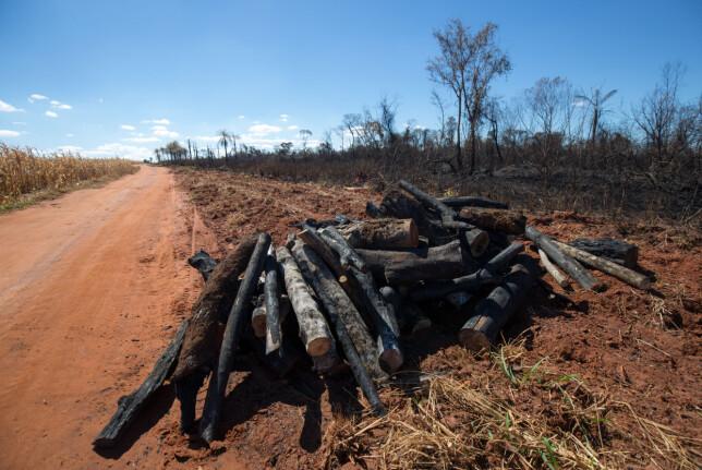 TJENER DOBBELT: Først tjener selskapene penger på tømmeret, som gjerne blir grillkull. Deretter brukes området til kyr og så til soya. - Økosystemer er i ferd med å bli ødelagt, sier Ines Luna i Regnskogfondet. Foto: Jim Wickens