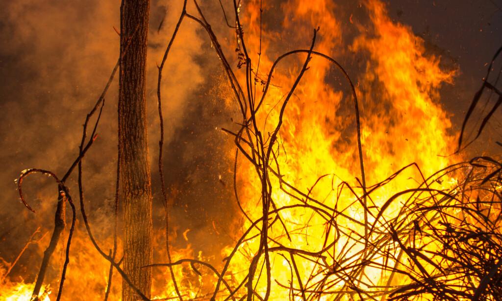 KATT OG MUS: Brasil er ikke lenger verstingen. Siden 2004 er avskogingen av regnskog i Brasil redusert med 80 prosent. Landet har fått på plass lover som begrenser avskoging og følger internasjonale forpliktelser. Nå har soyaindustrien flyttet seg til områder med svakere lovgivning og kontroll. Foto: Jim Wickens