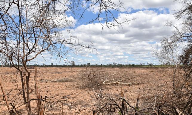 GRAN CHACO: Bulldoserne og brannene rykker stadig lenger inn i de store avsidesliggende områdene i Gran Chaco. Ikke noe annet sted i verden forsvinner skogen raskere. Foto: Jim Wickens
