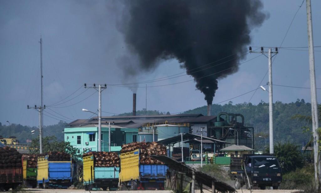 STORPRODUSENT: Indonesia står for nesten halvparten av biodrivstoffet som blir produsert i Norge. Produksjonen er svært skadelig for miljøet, og fører til enormt utslipp av klimagasser. Her fra en palmeoljefabrikk i Indonesia. Foto: AFP PHOTO / CHAIDEER MAHYUDDIN / NTB Scanpix