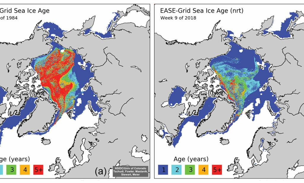 FORSVINNER: Grafikken fra University of Colorado, Boulder og NSIDC viser mengden av is i Arktis. Bildet til venstre er fra 1984. Den røde fargen illustrerer mengden av gammel is som vanligvis har vært 4-5 meter tykk og som kan overleve sommermånedene. Bildet til høyre er fra i år. Den blå fargen viser is som er opp til et år gammel. Det er is som lett brytes opp ved uvær og som smelter raskere. Illustrasjon: NSIDC.org
