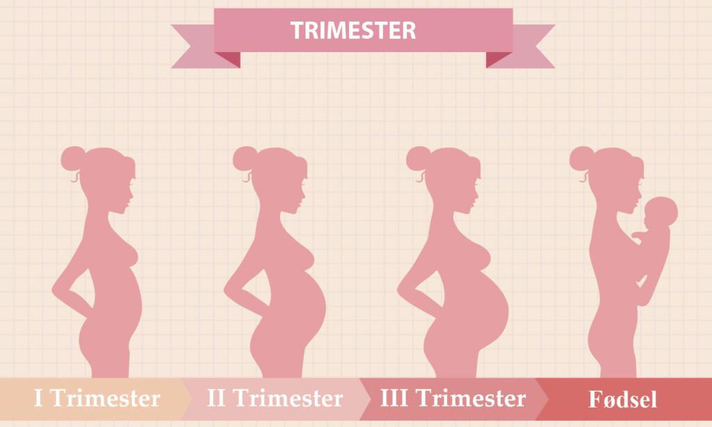TRIMESTER: Inndeling av svangerskapet i tre trimester er en skjematisk oversikt, som først og fremst er hensiktsmessig for helsepersonell. Illustrasjon: NTB Scanpix / Shutterstock