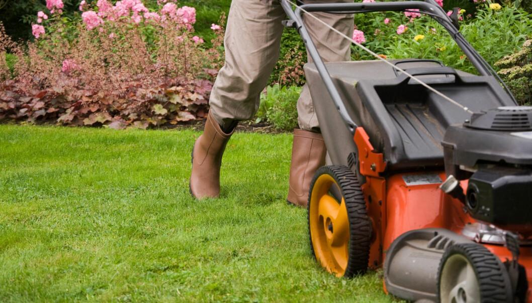 <strong>NABOSTØY:</strong> Naboen må klippe gresset, men det bør helst ikke skje på på røde dager. FOTO: NTB Scanpix