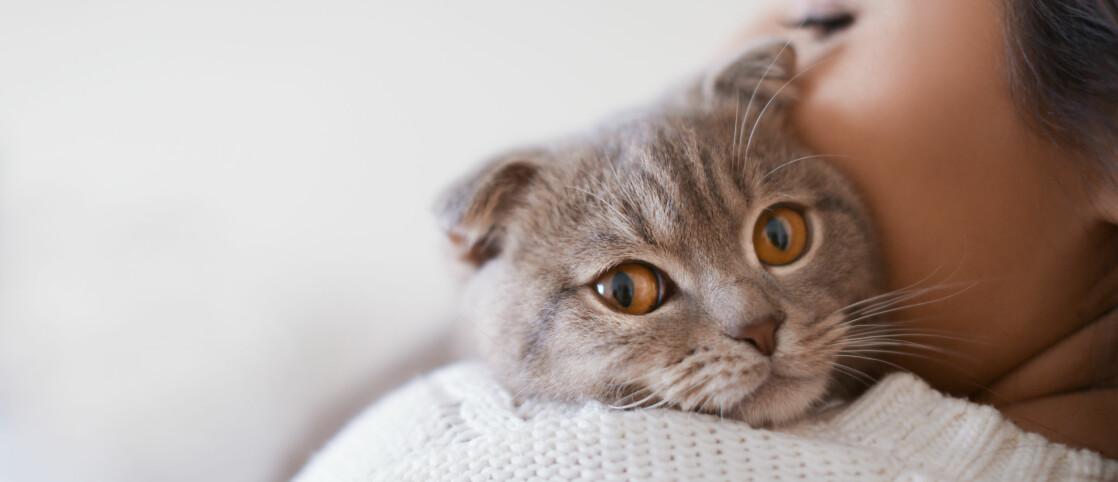 VÆR FORBEREDT: Mange drømmer om å ha et kjæledyr, men ikke alle tenker gjennom alt dét innebærer – noe som kan føre til at dyret ikke har det bra eller må omplasseres. FOTO: Scanpix
