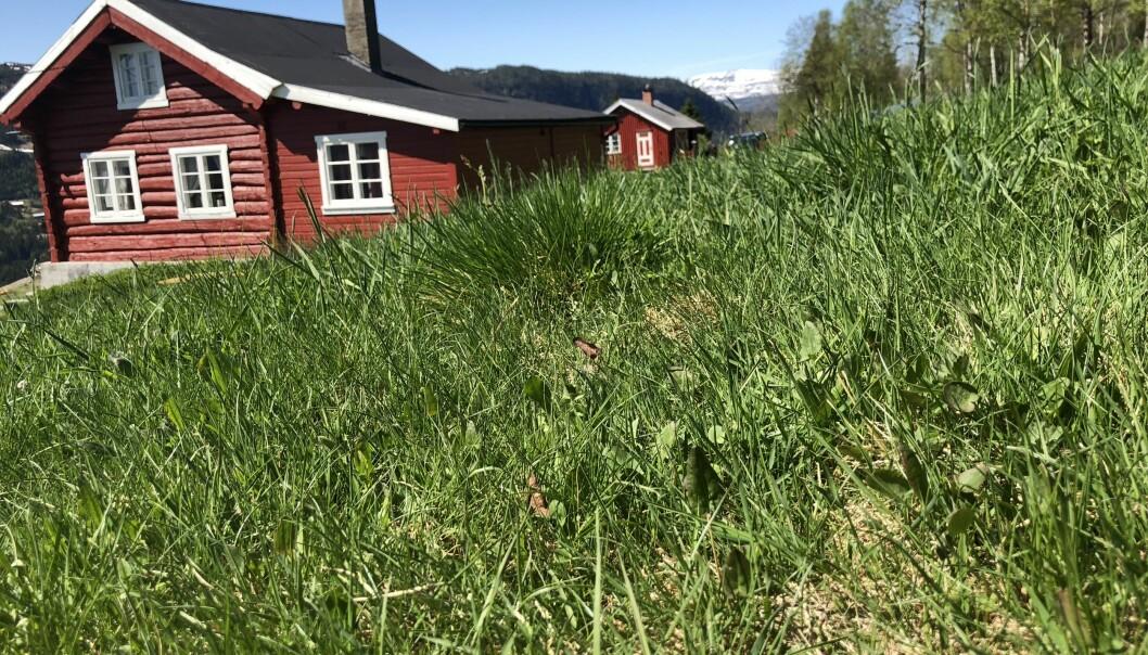 FRED OG IDYLL PÅ SKRINDO: Et lite småbruk, grønt gress og nydelig natur gir påfyll til en stressa sjel. FOTO: Sonja Evelyn Nordanger
