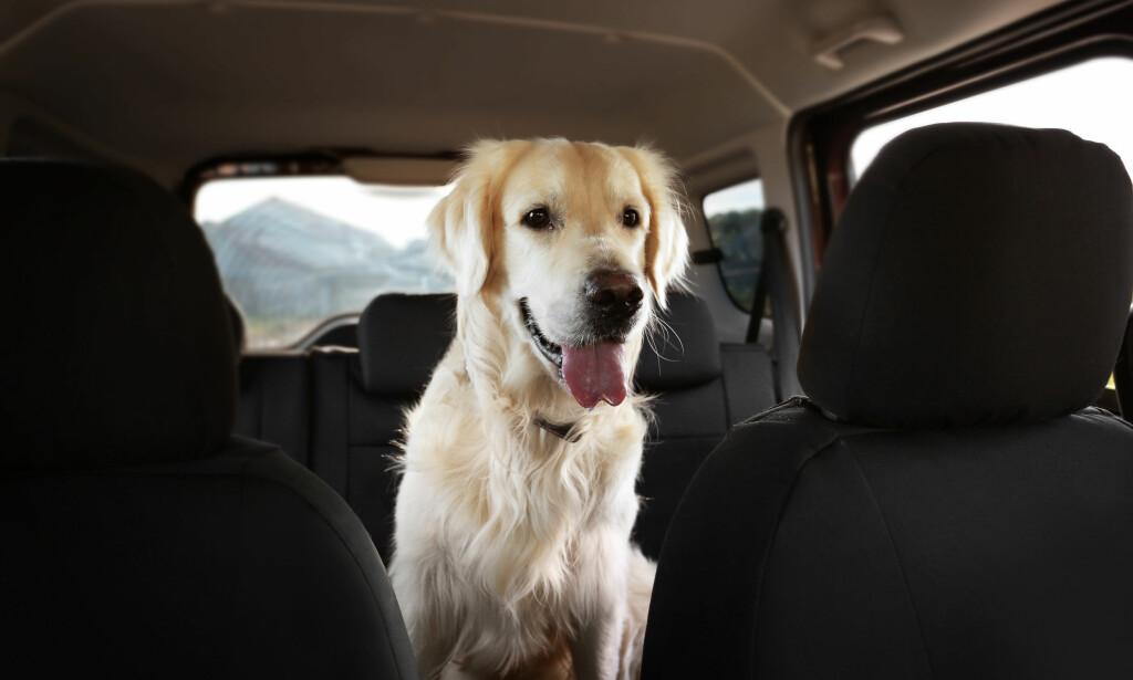 RING POLITIET: Skulle du se en hund innestengt i en bil, oppfordrer politiet deg til å ringe dem før du reagerer på egenhånd. Foto: NTB Scanpix