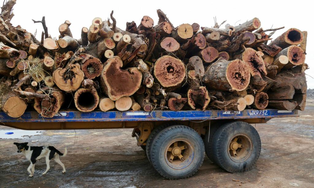 BETALTE PÅ FORHÅND: Soyaselskapene vedkjenner seg ikke avskogingen. Samtidig skjer den med rekordfart. Foto: Jim Wickens