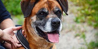 image: Høyesterett sa Bob måtte avlives - nå har hunden forsvunnet