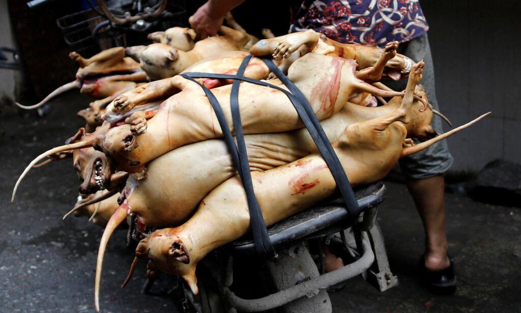 image: På innsida av slakteriet: - Dette er helvete på jord