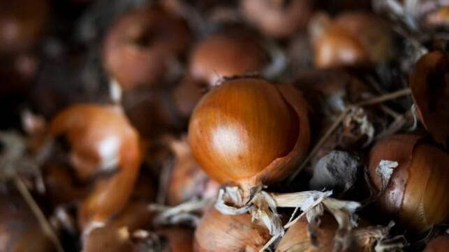 TØRKING: Ved å tørke grønnsaker før bruk, beholder man fargen, aromaen og den naturlige smaken langt bedre.