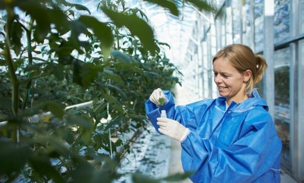 OMFATTENDE: I samarbeid med NIBIO har Mattilsynet analysert 1283 prøver av ferske, fryste eller bearbeidede matvarer, for å finne spor av plantevernmiddelrester. Foto: Mattilsynet