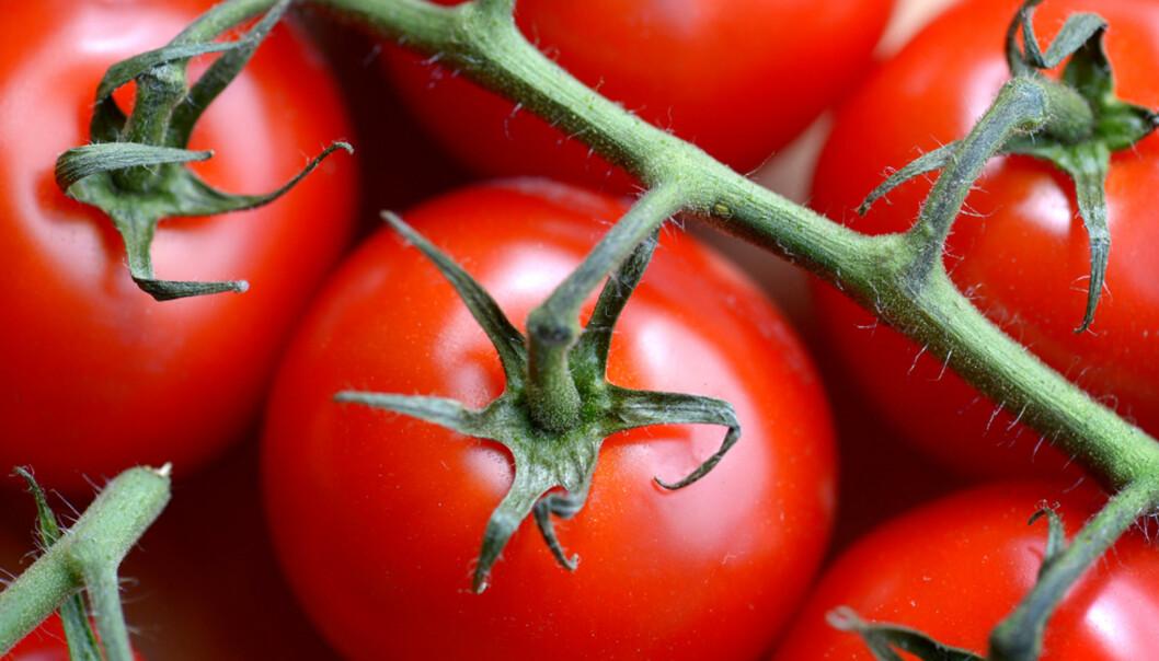 Derfor bør du spise massevis av tomat