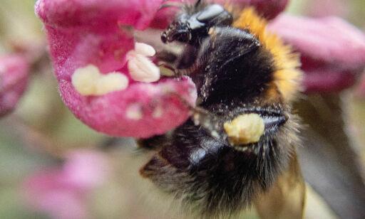 image: Norsk landbrukspolitikk er insektenes verste fiende