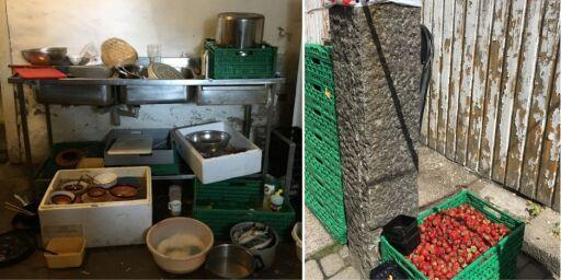 image: Avføring ved åkrene, manglende håndvask og arbeidere uten kontrakter