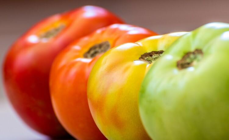 PÅ SITT BESTE: Tomaten til venstre er på sitt modneste, og det er denne Knorr bruker i sine supper. Tomaten til høyre er den som plukkes for så å modnes på lager før den selges i butikker.