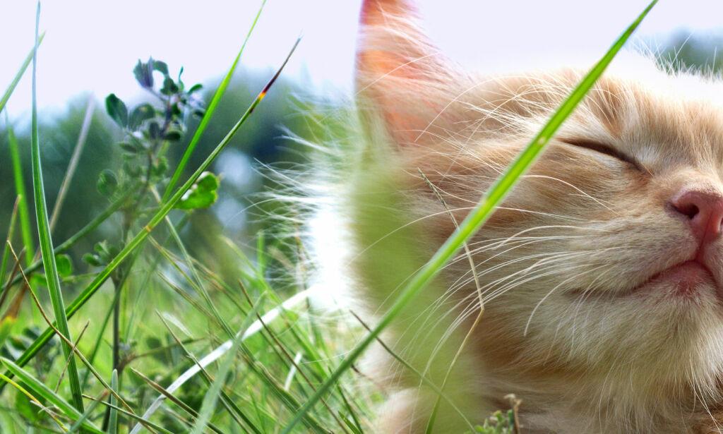 image: Ikke alle bør få seg katt