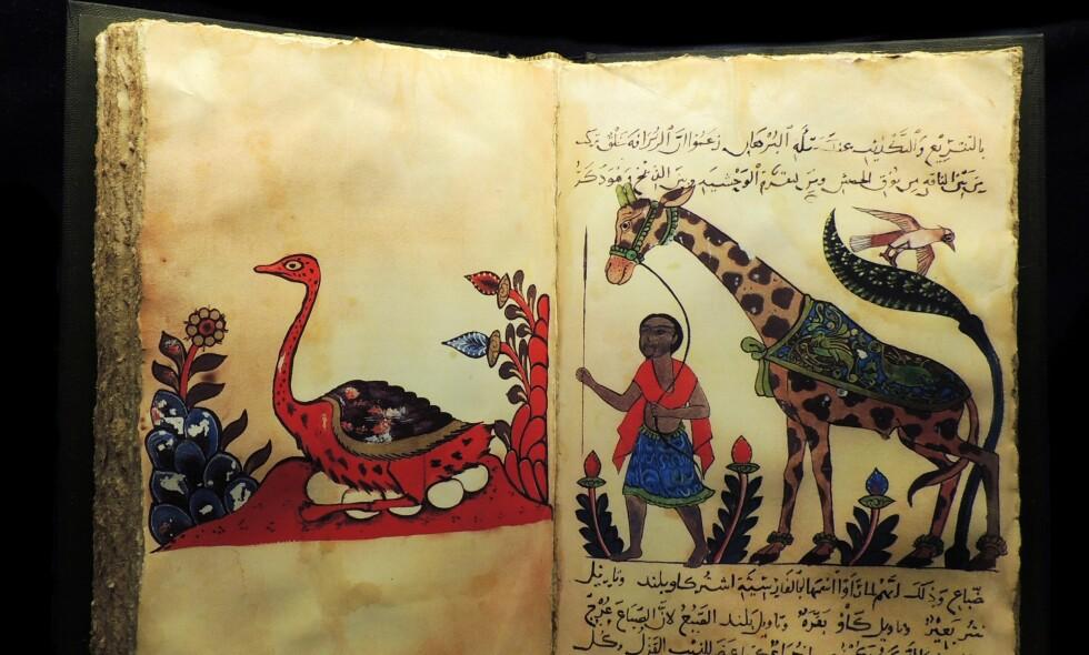 """DYRENES BOK: I """"Dyrenes bok"""" sammenlignet arabiske Al-Jahiz (f. 766) mennesket med andre arter. Foto: Science Photo Library / NTB Scanpix"""