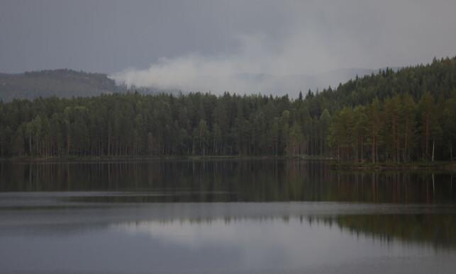 RØYK: Torsdag kveld klokka 9 hadde brannvesenet enda ikke kontroll på brannen ved området rundt Elgsjø i Telemark. Foto: Christian Roth Christensen / Dagbladet.