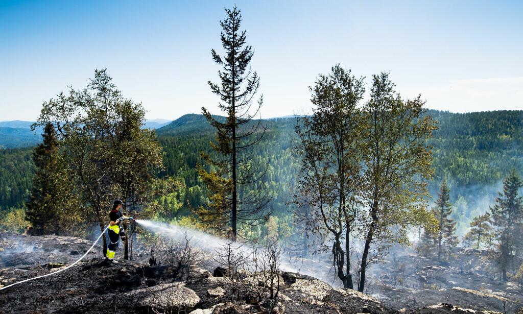 BRANN: Det knitrer av brannen i den tørre lyngen i Siljan i Telemark. Siden torsdag ettermiddag har brannmannskaper og personer fra Sivilforsvaret slokket brannen. Nå sprer den seg.