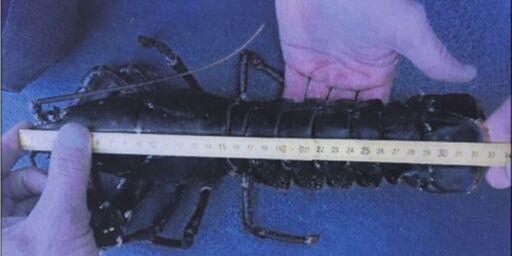image: Må i retten: Politiet mener Jan Petter fanget hummer som var 0,5 cm for lang