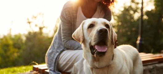 Disse sykdommene kan du smittes med av kjæledyret ditt