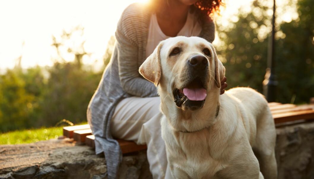 KJÆLEDYR: Å ha kjæledyr kan faktisk være bra for helsa, men de kan også smitte oss med sykdom. FOTO: NTB Scanpix