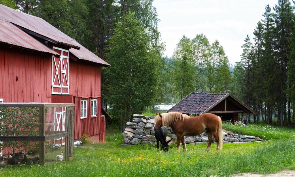IDYLLISK: Produksjonsselskapet Strix har snust på området ved Gjedtjernet gård i flere år. Den omdiskuterte fylkesveien kan såvidt skimtes bak tjernet i bakgrunnen. Foto: Alex Iversen / TV 2