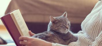 Alle katter fortjener et hjem
