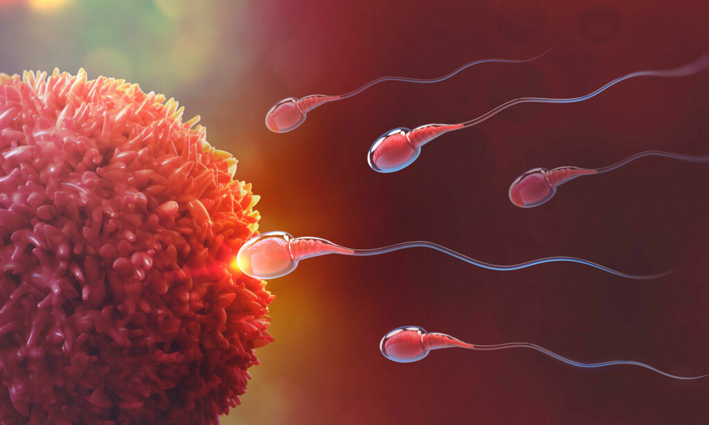 STARTEN PÅ ET LIV: Idet sædcellen går inn i eggcellen starter et nytt liv. Egget vandrer via eggleder ned til livmoren og forsøker å feste seg i veggen. Illustrasjon: NTB Scanpix/Shuttertock