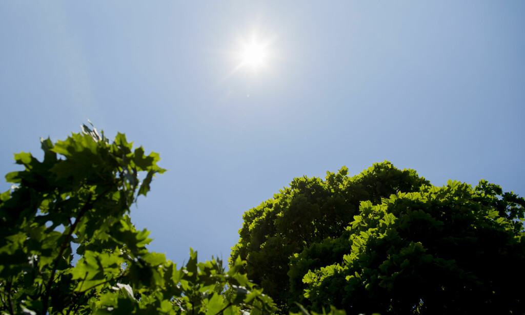 OVARM: Årets sommer har i store deler av Europa vært den varmeste siden målingene startet, opplyser USAs føderale etat for hav- og atmosfæreforskning (NOAA). Her fra Vigelandsparken i Oslo. Foto: Vegard Wivestad Grøtt / NTB scanpix