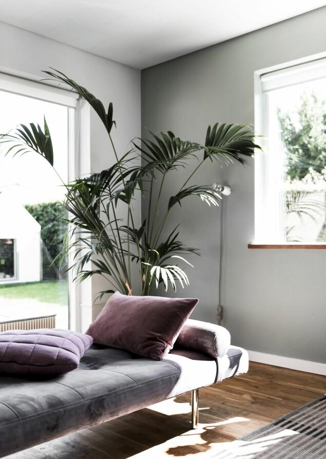 Midt i rommet har paret valgt å plassere en daybed i velur. Det skaper luft i rommet når møblene trekkes vekk fra veggene. Sofa og daybed i velur fra Ilva og lampe fra Flos. FOTO: Benjamin Lee Rønning Lassen