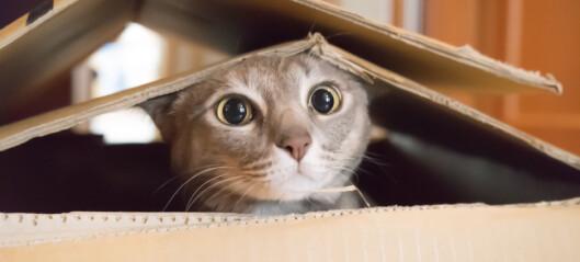 - Katter er psykopater