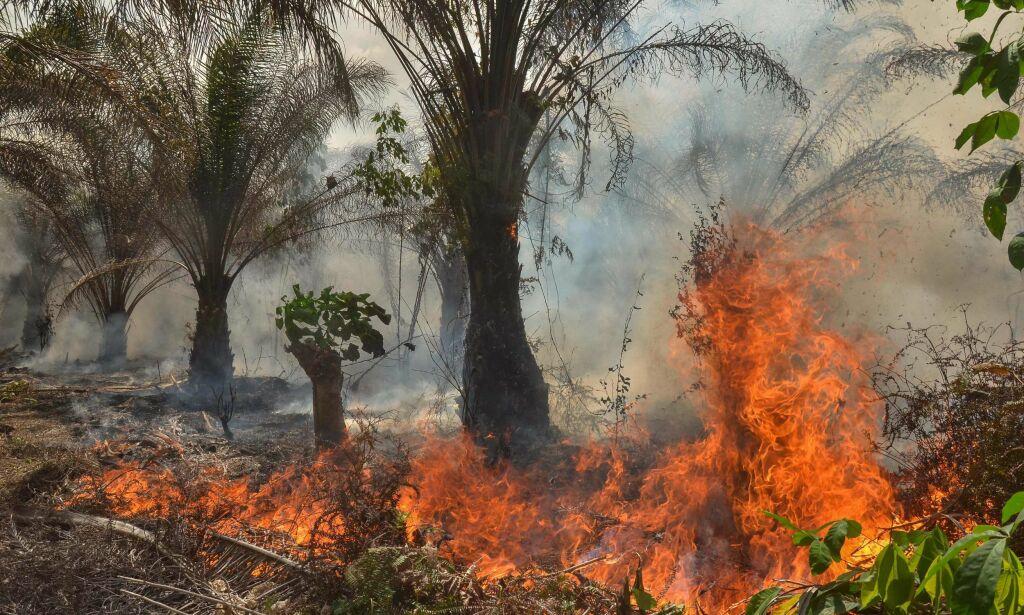 image: Slik blir vi kvitt palmeoljen