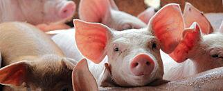 image: Tre dårlige grunner til å spise kjøtt