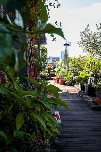 I HI: I hagen finnes det planter som tåler den kalde vinteren, og planter som må gå i hi. FOTO: Lise Åserud / NTB scanpix