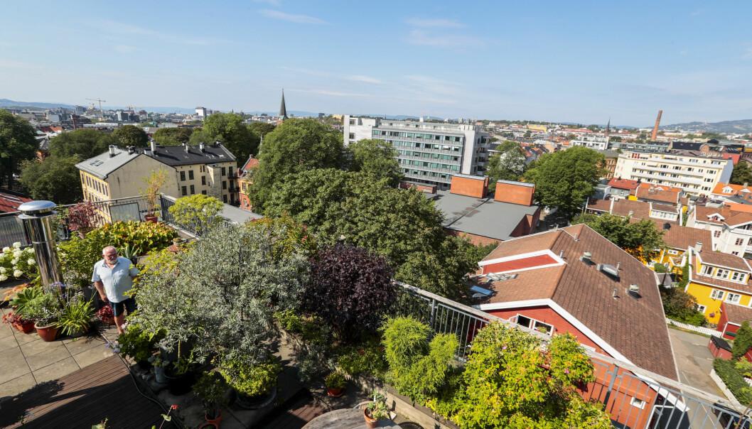 FORVANDLING: For 25 år siden var det bare et tak der Kjell Johansson står. I dag er det en frodig hageterrasse på toppen av bygningen på Rodeløkka i Oslo. FOTO: Lise Åserud / NTB scanpix